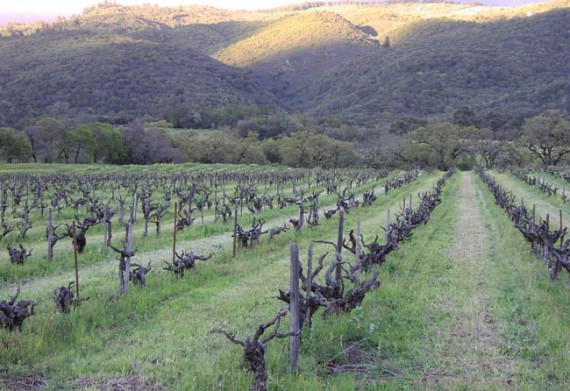 Bucklin Old Hill Ranch Vineyard